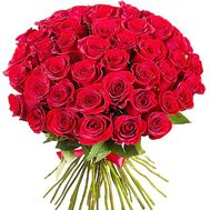 51 red imported roses - flowers and bouquets on roza.zp.ua
