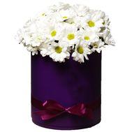 Белые ромашки в коробке - цветы и букеты на roza.zp.ua
