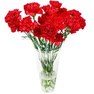 Bouquet of carnations - flowers and bouquets on roza.zp.ua