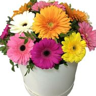 Buy gerbera in a box - flowers and bouquets on roza.zp.ua