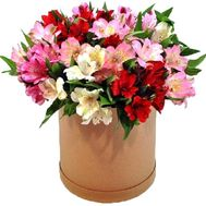 Удивительная коробка альстромерий - цветы и букеты на roza.zp.ua