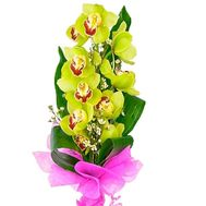 """Green orchid branch"" in the online flower shop roza.zp.ua"