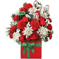 Christmas flowers in a box - flowers and bouquets on roza.zp.ua