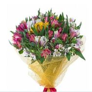 Bouquet of 19 alstromeries - flowers and bouquets on roza.zp.ua