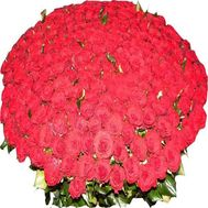 Bouquet of 501 red roses - flowers and bouquets on roza.zp.ua