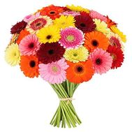 Bouquet of 51 gerberas - flowers and bouquets on roza.zp.ua
