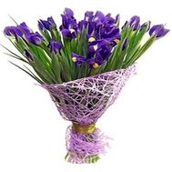 25 irises - flowers and bouquets on roza.zp.ua