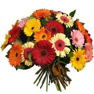 Bouquet of 35 gerberas - flowers and bouquets on roza.zp.ua