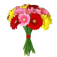 Bouquet of 15 gerberas - flowers and bouquets on roza.zp.ua