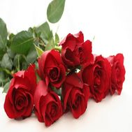 Bouquet of 7 red roses - flowers and bouquets on roza.zp.ua