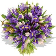 Bouquet of 35 irises and 16 tulips - flowers and bouquets on roza.zp.ua