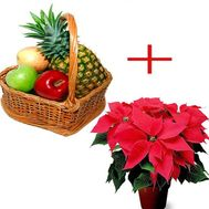 Fruit basket and poinsettia - flowers and bouquets on roza.zp.ua