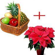 Корзина фруктов и пуансеттия - цветы и букеты на roza.zp.ua