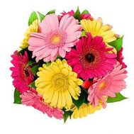 Bouquet of 13 gerberas - flowers and bouquets on roza.zp.ua