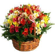 Basket of flowers from 25 alstromeries - flowers and bouquets on roza.zp.ua