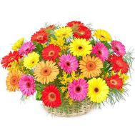 Basket of flowers from 25 gerberas - flowers and bouquets on roza.zp.ua