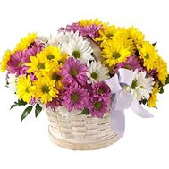Basket of flowers from 11 chrysanthemums - flowers and bouquets on roza.zp.ua