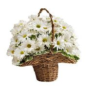 Basket of flowers from 9 chrysanthemums - flowers and bouquets on roza.zp.ua