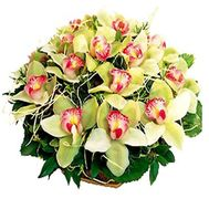 Basket of flowers from 19 orchids - flowers and bouquets on roza.zp.ua