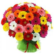 Bouquet of 101 gerberas - flowers and bouquets on roza.zp.ua