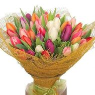 Bouquet of 85 tulips - flowers and bouquets on roza.zp.ua