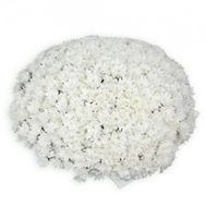 Bouquet of 101 chrysanthemums - flowers and bouquets on roza.zp.ua
