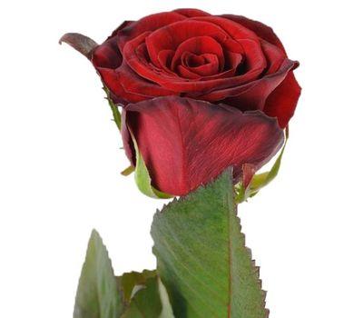 """""""Красные розы поштучно"""" в интернет-магазине цветов roza.zp.ua"""