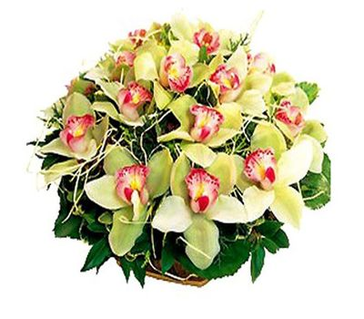 """""""Basket of flowers from 19 orchids"""" in the online flower shop roza.zp.ua"""