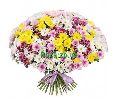 """""""101 хризантема в букете"""" в интернет-магазине цветов roza.zp.ua"""