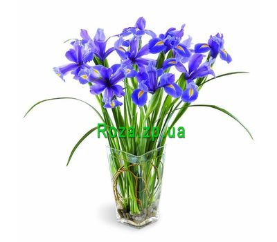 """Bouquet of 11 irises"" in the online flower shop roza.zp.ua"