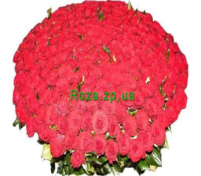 """""""Bouquet of 501 red roses"""" in the online flower shop roza.zp.ua"""