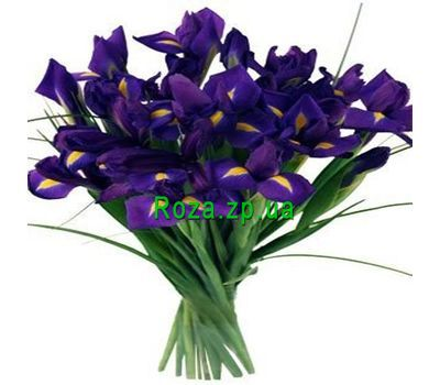 """17 irises"" in the online flower shop roza.zp.ua"