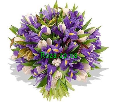 """Bouquet of 35 irises and 16 tulips"" in the online flower shop roza.zp.ua"