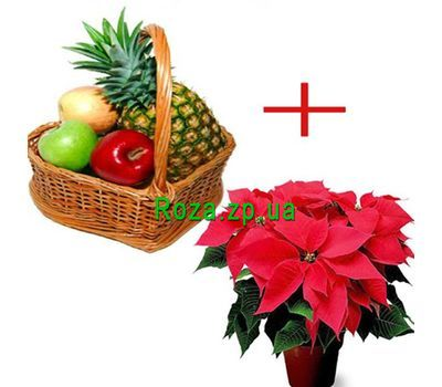 """Fruit basket and poinsettia"" in the online flower shop roza.zp.ua"