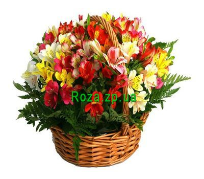 """Basket of flowers from 25 alstromeries"" in the online flower shop roza.zp.ua"