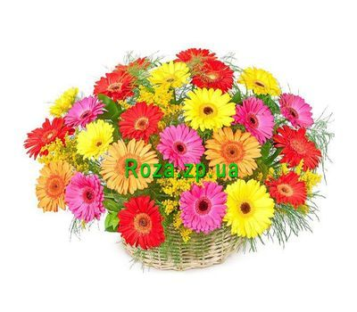 """Basket of flowers from 25 gerberas"" in the online flower shop roza.zp.ua"