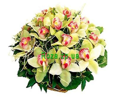 """Basket of flowers from 19 orchids"" in the online flower shop roza.zp.ua"