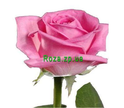 """""""Розовые розы поштучно"""" в интернет-магазине цветов roza.zp.ua"""