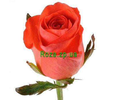 """""""Оранжевые розы поштучно"""" в интернет-магазине цветов roza.zp.ua"""